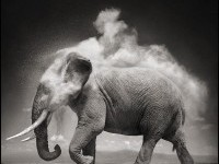 6 Most Creative Animal Photographers - My Life Scoop