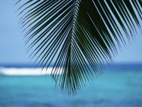 blue,ocean blue ocean landscapes nature hawaii palm leaves 1920x1200 wallpaper – Oceans Wallpapers – Free Desktop Wallpapers