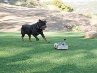 Battery-Operated Canine Companions - The Go-Go Dog Pal Gives Pooches Something to Chase (GALLERY)