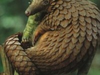 Pangolin Climbing A Tree By George Steinmetz | Cutest Paw