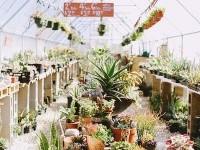 @???????? — The Forgotten Garden
