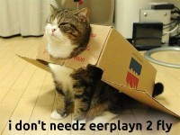 Mazes and Cats: Eurofighter Maze and Hilarious Cats