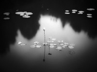 Black And White Nature Photography – Fubiz™