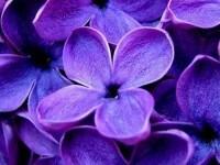 *** deep purple — The Forgotten Garden