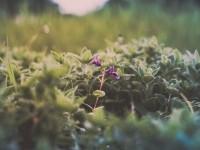 Morning   Prathmesh Sawant   Flickr