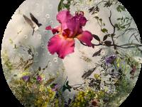 Des images composites de centaines de photos en hommage à la nature - La boite verte