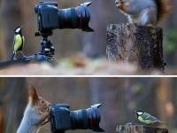 Gorgeous Animals - ???????