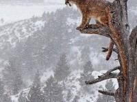 Spectacular Puma Shot