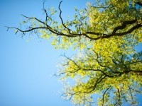 Free Images : nature, branch, blossom, sky, sunlight, leaf, flower, foliage, green, birch, autumn, season, branches, deciduous, ecosystem, the background, flowering plant, maidenhair tree, woody plant, land plant 4256x2832 - - 1351866 - Free stock photos - PxHere