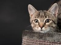 jakie Legowisko dla kota? Ranking 2018 i Opinie na Elfiasfora.pl
