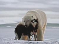 Foto Il senso della vita: Amore La mostra Nat Geo Italia - 1 di 18 - National Geographic